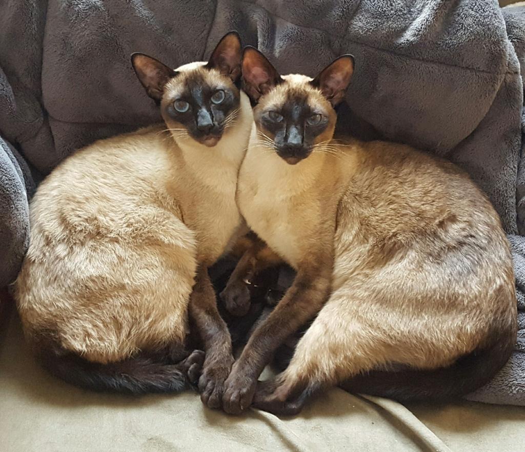 Cat Care – Specialty Purebred Cat Rescue