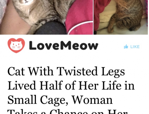 Belle featured on LoveMeow