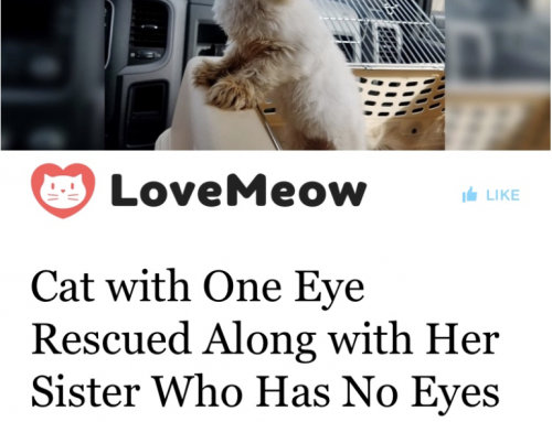 Lola and Lucy featured on LoveMeow