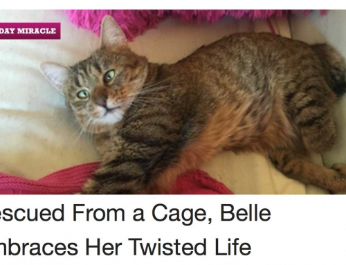 Belle featured on Catster