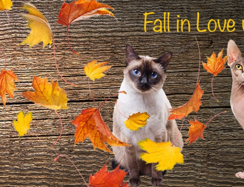 Fall in Love with a Feline
