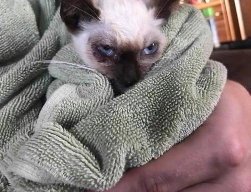 Kitten Dave