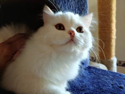 Craigslist El Paso Pets | Top New Car Release Date